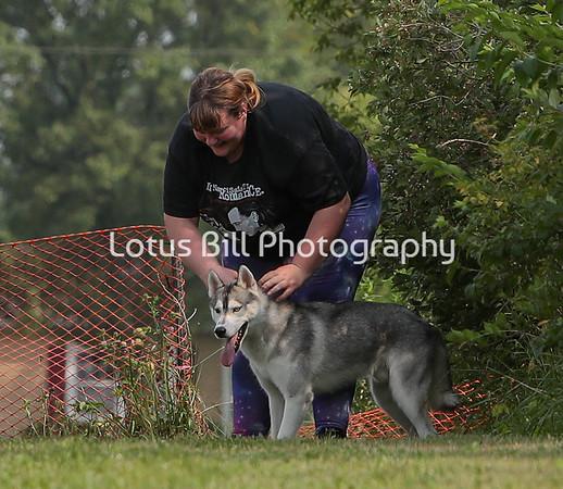 Siberian Husky LSR3