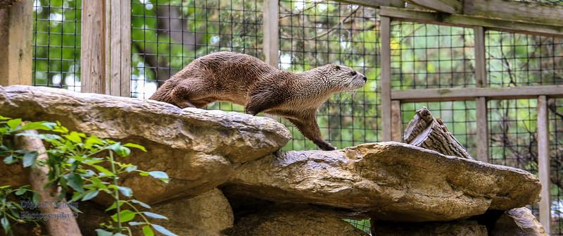 2016-07-17 Fort Wayne Zoo 752LR.jpg