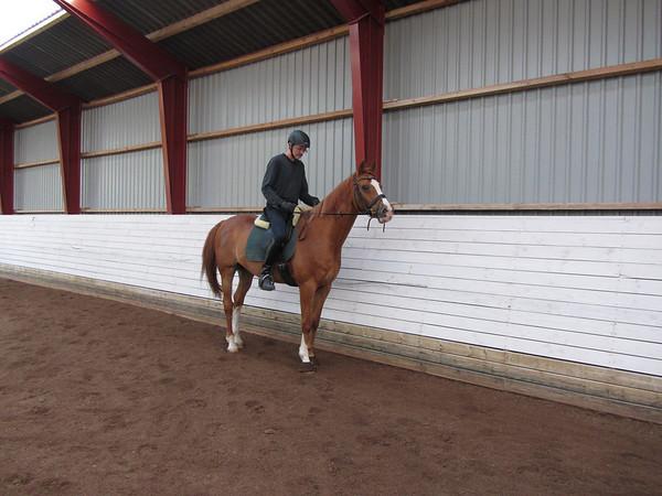 jeanluc horse