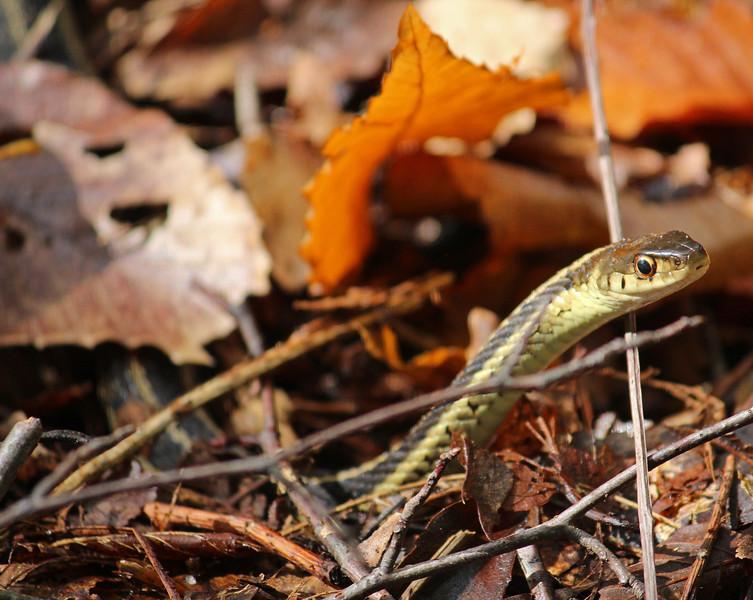 snake woods 14.jpg