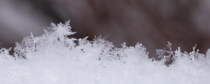 snowflakes-1173.jpg