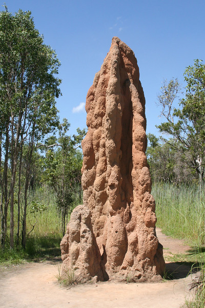 LNP Magnetic Termite Mounds (2).JPG