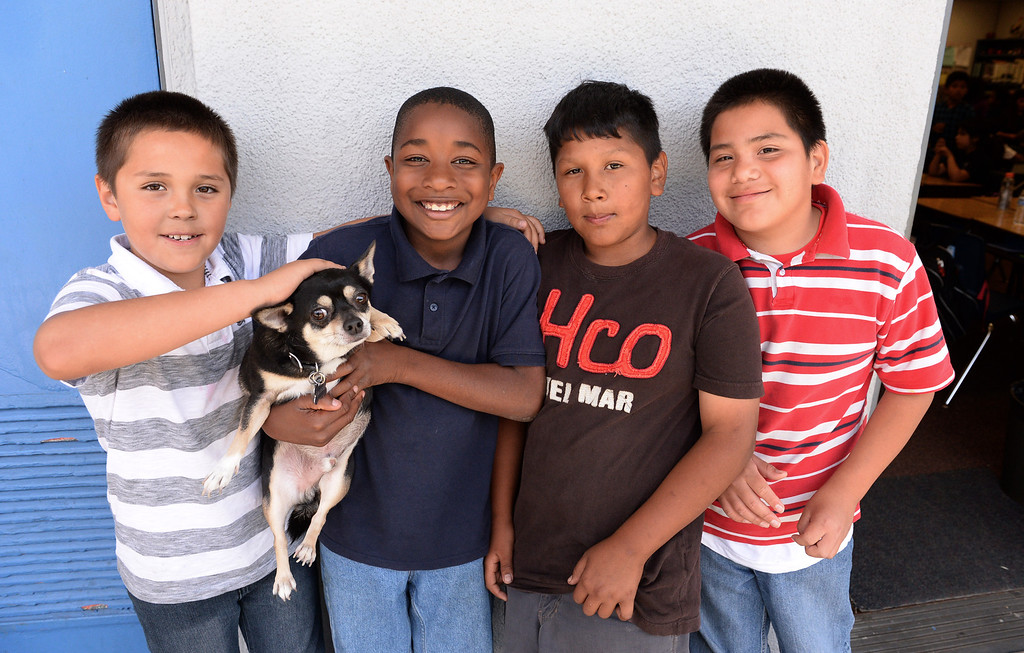 . Diego\'s Dudes lunchtime reading club at Felton Elementary School in Lennox. Teacher Alex Carrera brings her Chihuahua Diego to class as a mascot to help boys improve reading skills. Edgar Vera, Charles Alle, Miguel Tuznoh and Jose Cervantes.  Photo by Brad Graverson 5-15-13