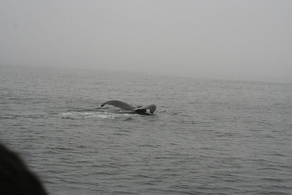 Whale Watching - October '08