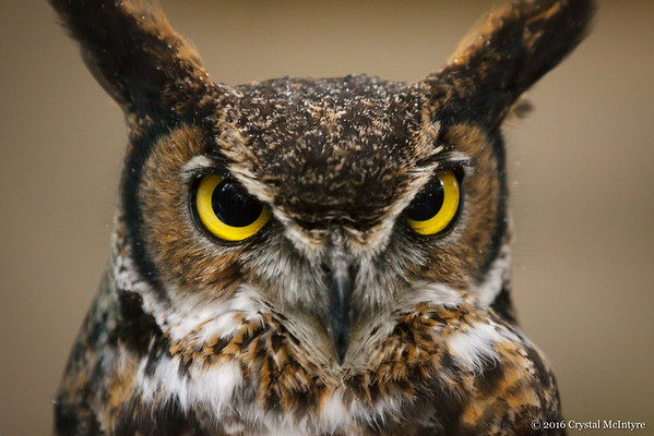 Raptor Center Open House May 7, 2016