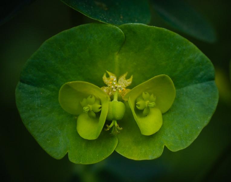 green _blossom_041810-9.jpg