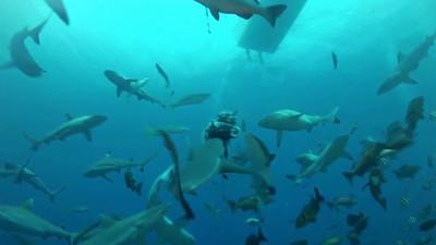 Yap video - Sharks feeding, Mandarinfish mating, Mantas swooping