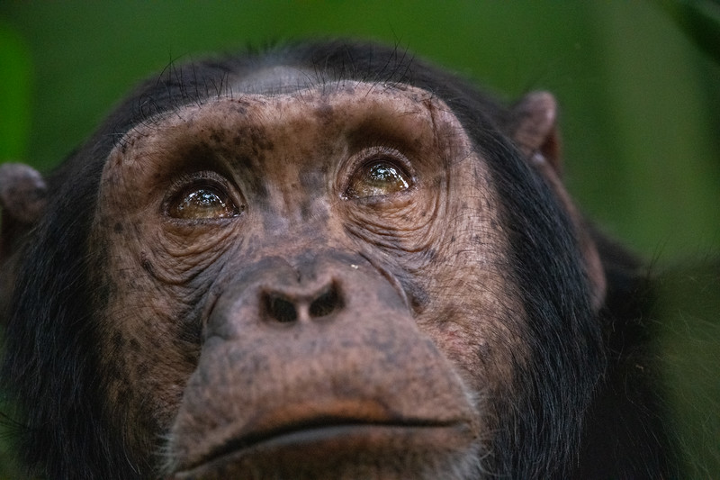 Uganda_T_Chimps-1723.jpg
