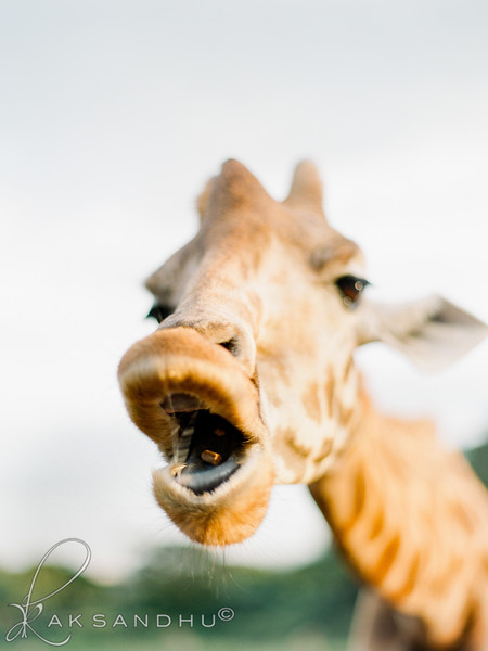 Safari-Africans-143.jpg