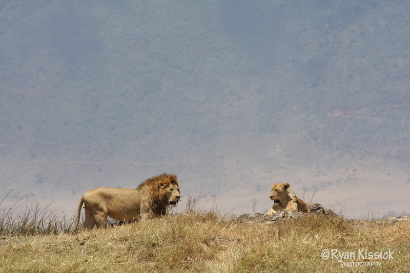 A pair of lions with Ngorogoro Crater in the background