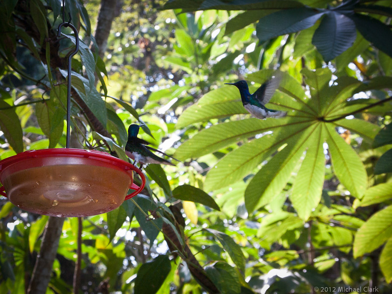Panama 2012-13-2.jpg