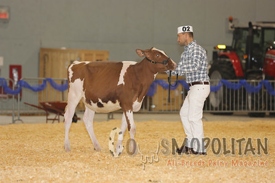 Supreme Red & White Holstein 15