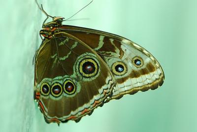 Butterflies (starring special guest frogs)