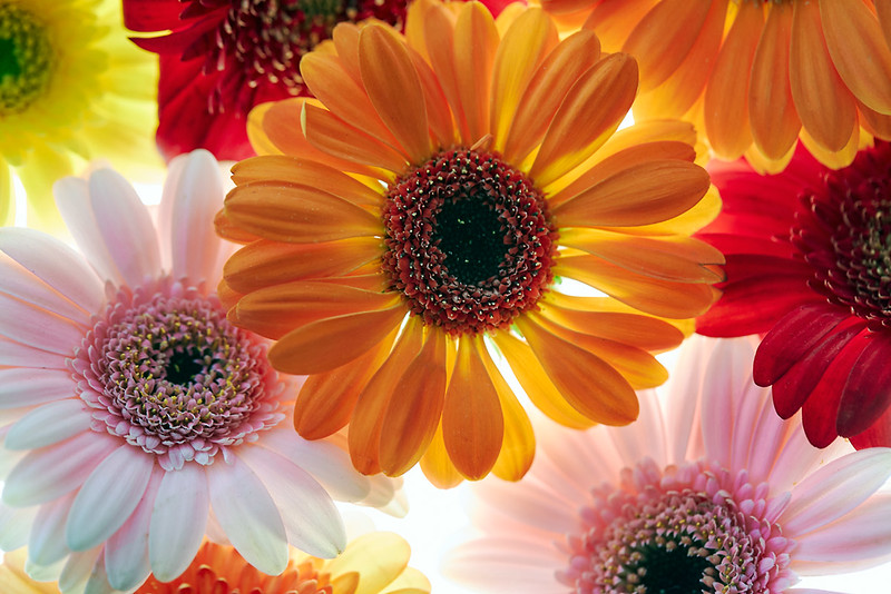 Flower_71I8688.jpg