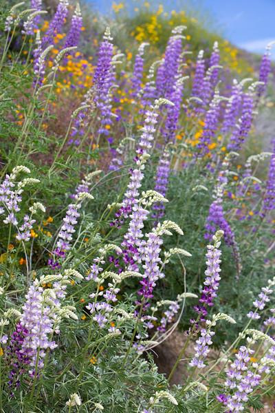 Spring Flowers B-75.jpg