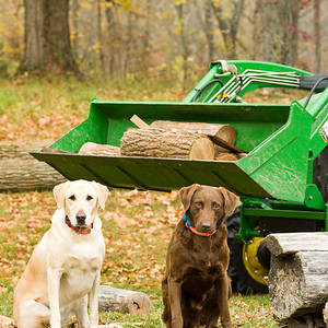 Dogs and Picking Berries - October 08