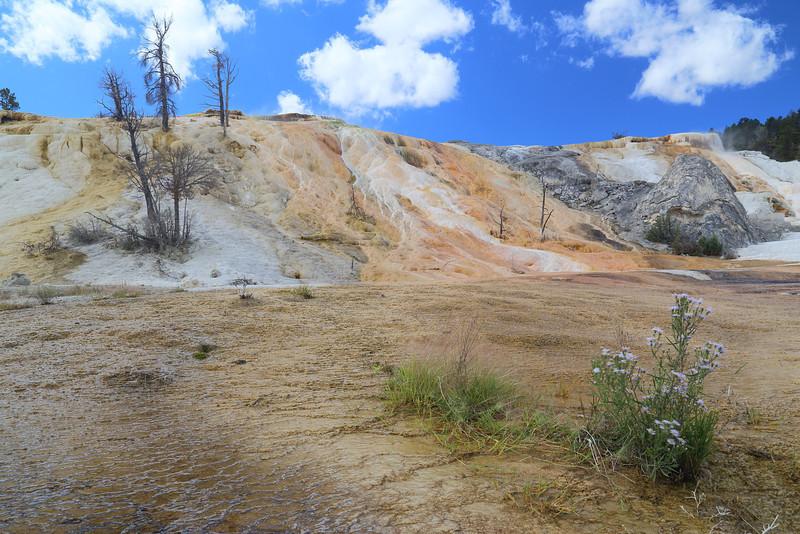 Yellowstone 120.JPG