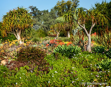 Los Angeles County Arboretum and Botanic Garden