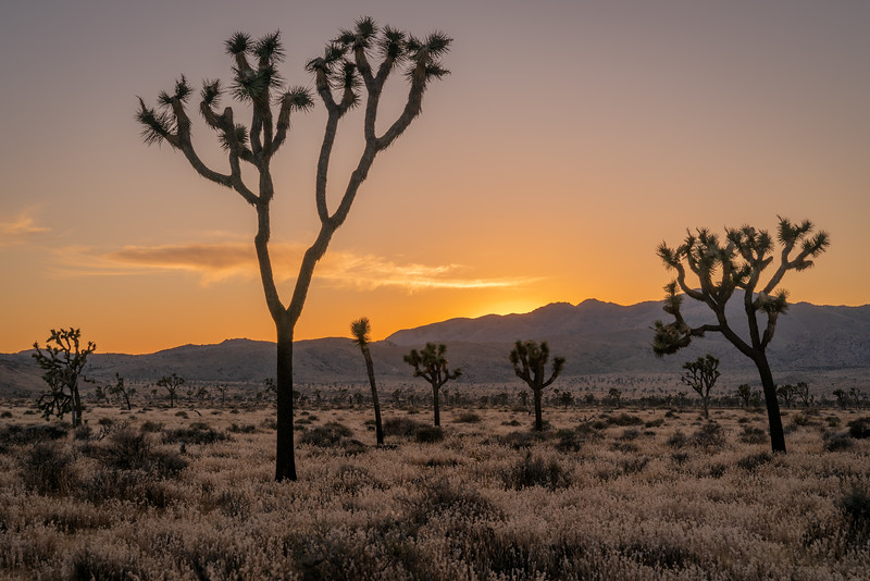 Joshua Tree National Park - CA