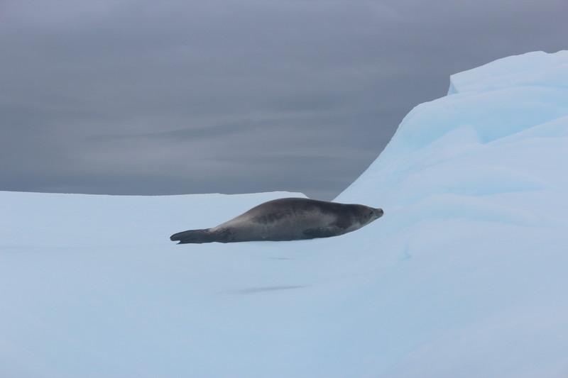 Antarctica 276.JPG