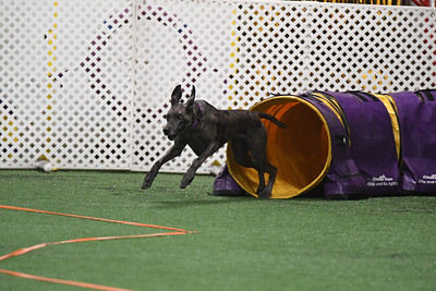 York County Open/Novice AKC Agility Trial October 14-15