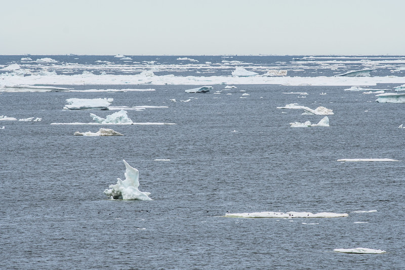 Hudson Bay ice floes Launch Road Churchill Manitoba Canada DSC09636.jpg