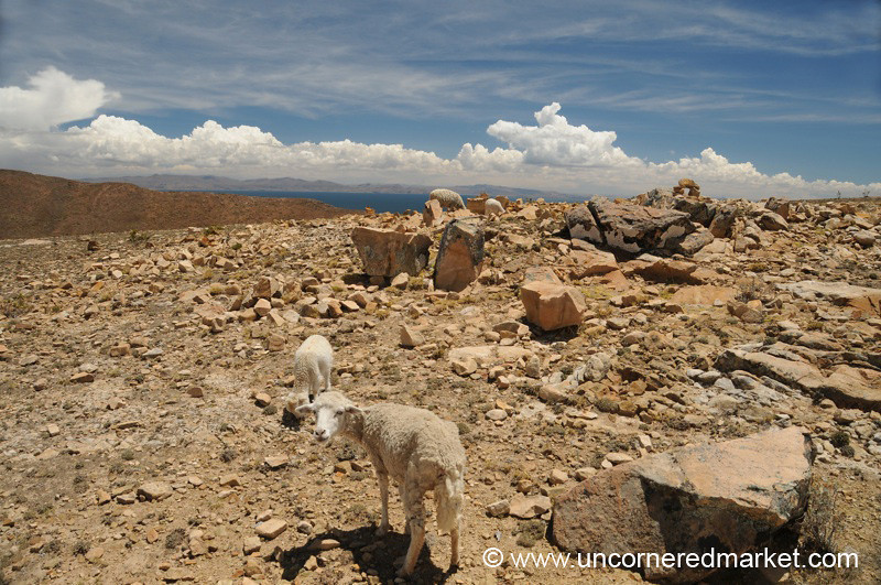 Looking for Food on the Isla del Sol - Lake Titicaca, Bolivia