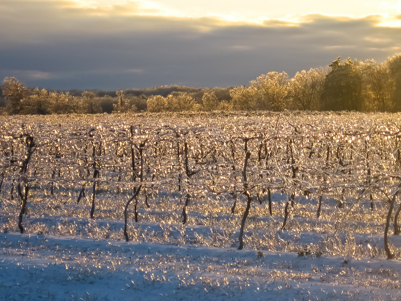 Out for a drive in the Niagara Wine Country during an ice storm. Silly thing to do but this view when the sun came out made all the danger worth it!!