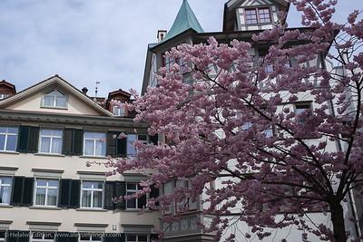 St. Gallen 2019