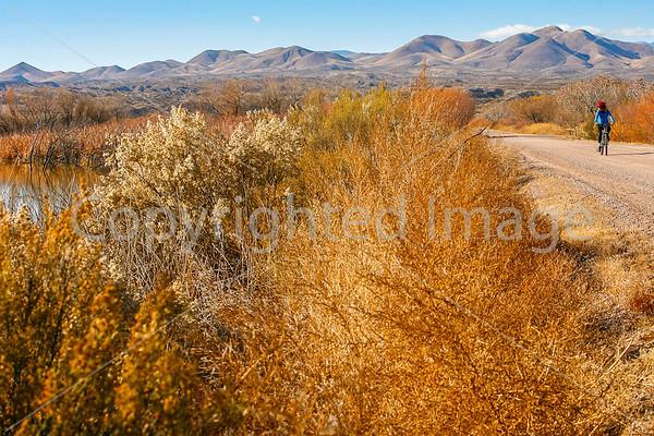 Bosque del Apache National Wildlife Refuge - Biking  (in progress)
