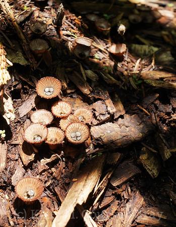 Fungi & Lichen