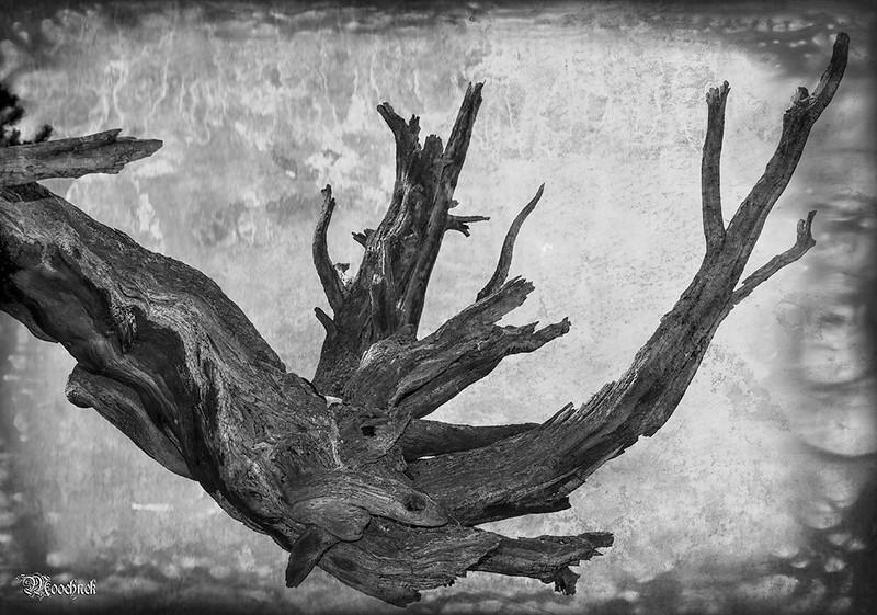 Crazy Wood