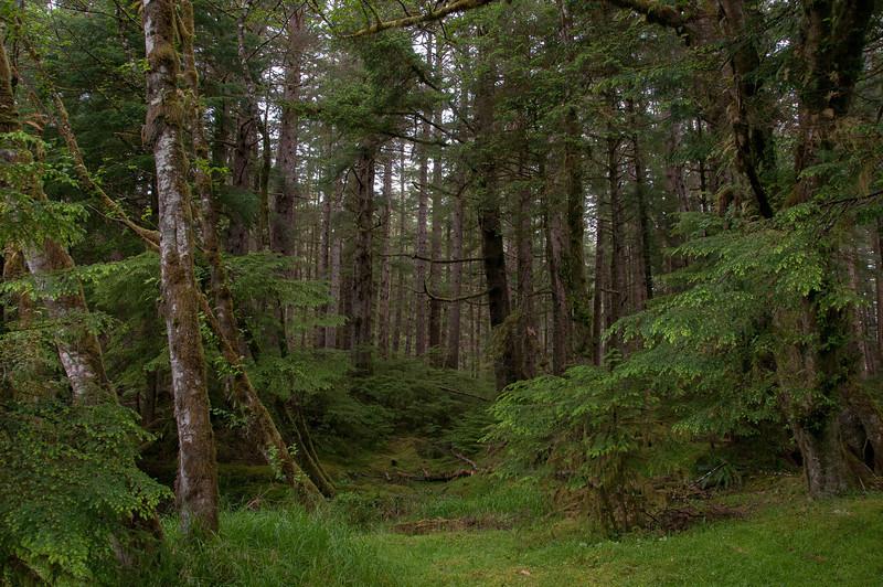 Naikoon Provincial Park in Graham Island, Haida Gwaii, British Columbia