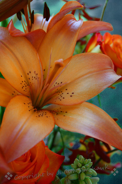 Copper Lily ~ This unusually-colored lily was in an arrangement at the Redlands Horticultural Society's 98th annual Flower Show, in 2010.