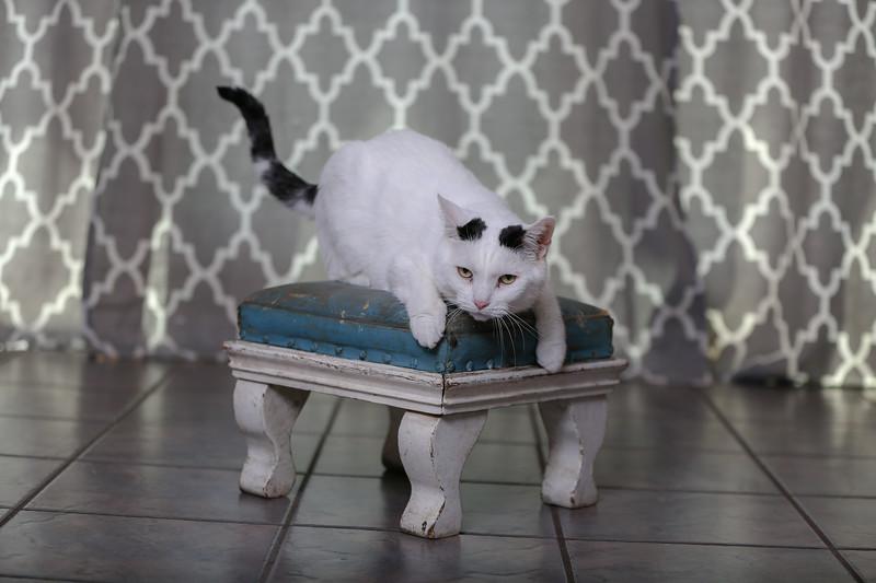 Polzin Cats-2.jpg