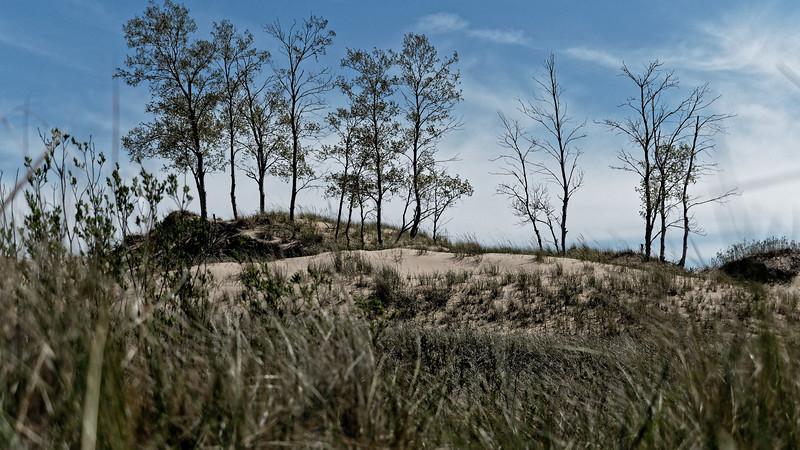 Trees on Dune