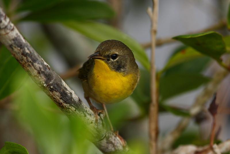 Bird0014.JPG