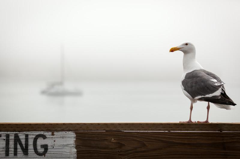 seagull_butt.jpg