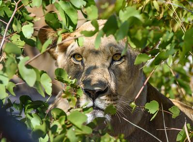 Africa - Wild Animals!