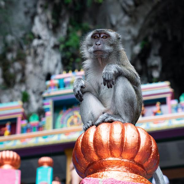Batu Macaque || Batu Caves