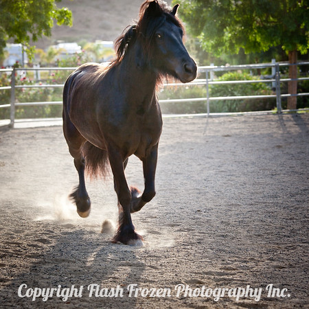 Ponies at Play in Ventura County