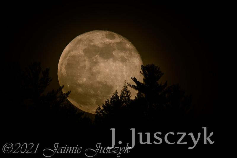 Jusczyk2021-7986-2.jpg