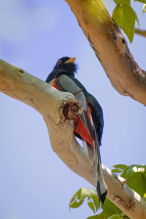 Birds of the Chiricahua Mtns., 2012