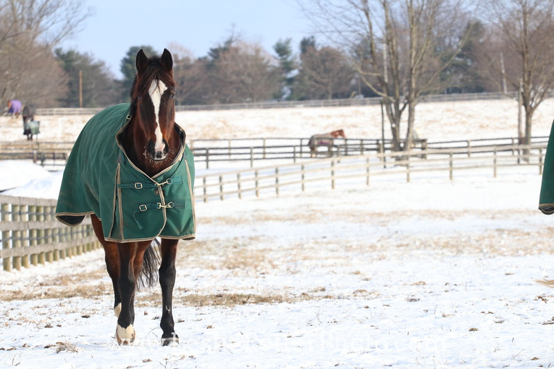 Horse Wearing a Green Blanket in the Snow