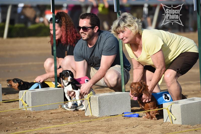 Belterra Park - Wiener Dog Races-11.jpg