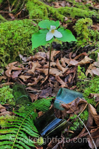 Trillium and Old Glass Bottles