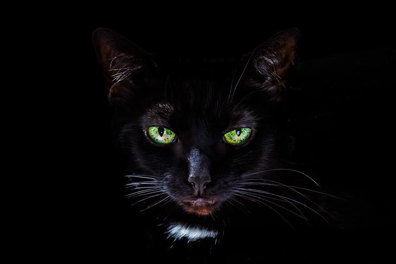 Matilda Spooky Shot.jpg
