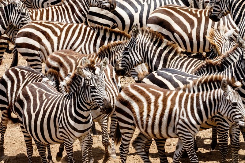 Kenya 2015-04729.jpg