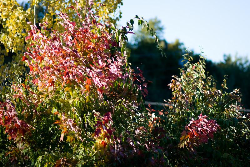 Leaves beginning to turn.