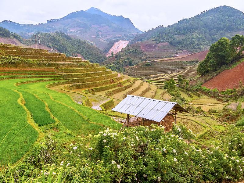 Vietnam Mu Cang Chai_P1110122.jpg